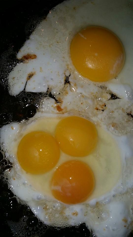 triplet eggs